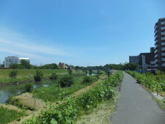 富士見市付近の新河岸川