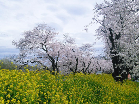 城ヶ谷堤(北本市)