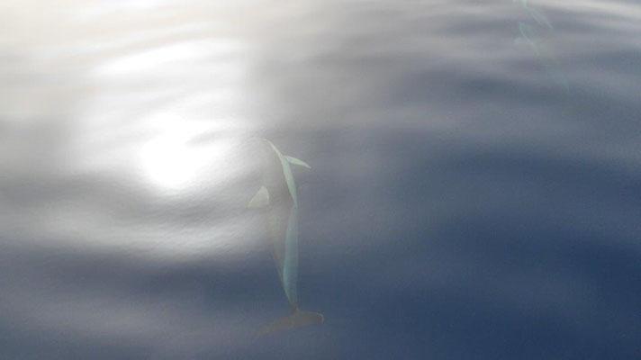5 Delphine begleiten uns eine halbe Stunde