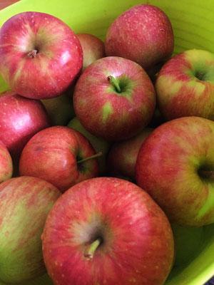 芸北りんごの季節がやって来ました!!