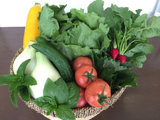 今日の仕入れ野菜(黄ズッキーニ、きゅうり、レタス、とまと、玉ねぎ、バジル、ミント、大葉、ラディッシュ)