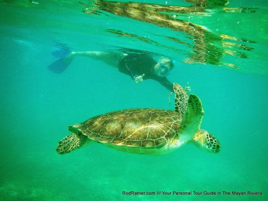 Spot many Turtles.