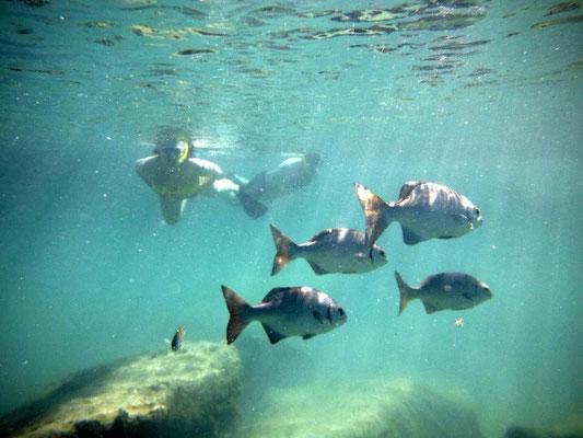 Snorkel a Natural Aquarium.