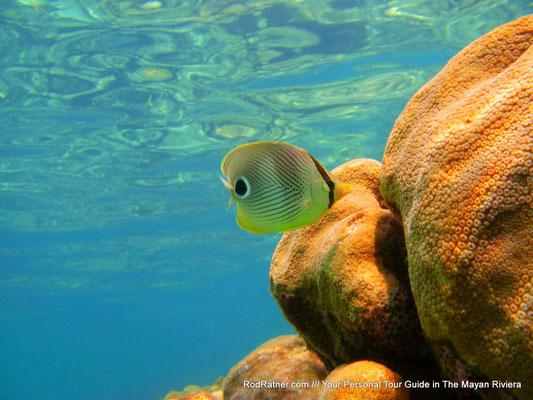 Shallow Reefs.