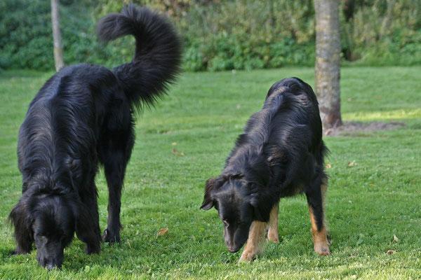 Aemon und Arya von der Eifelbuche