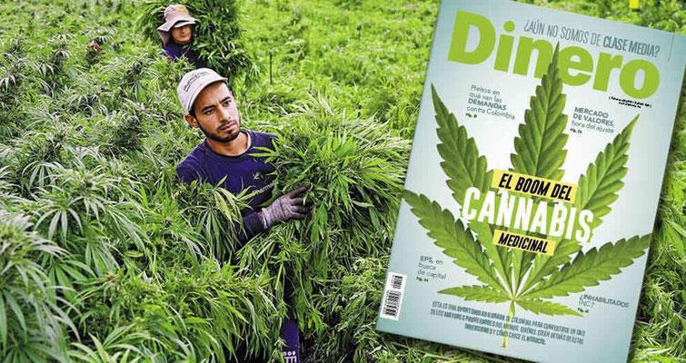 Revista Dinero: El Boom del Cannabis Medicinal