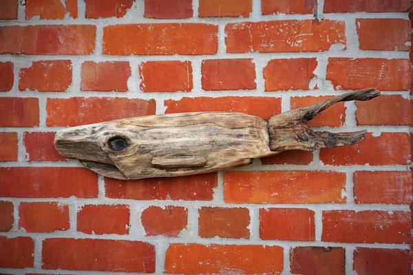 Big Fish 60cm Preis: 45€