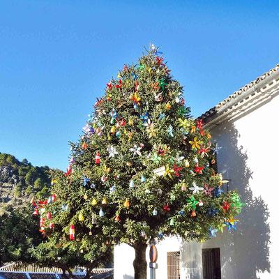 Weihnachtsbaum - Grazalema