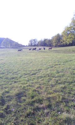le sponeys en hivernage, vers l'Aiguillon
