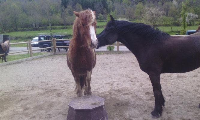 Biscuit et Bisou se disputent pour le touret