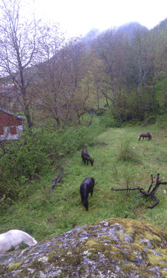 Les poneys changent de pré
