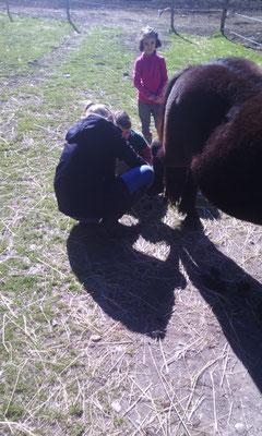 les soins aux poneys