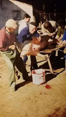 """Colas """"el carbonero"""" en la granja de Higueruela. Foto remitida por M.A."""