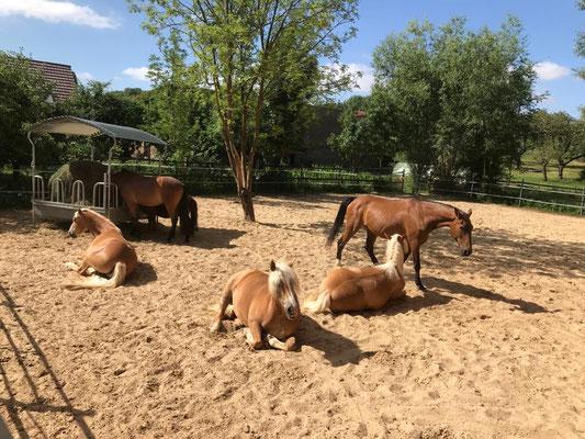 Pferde im Sand
