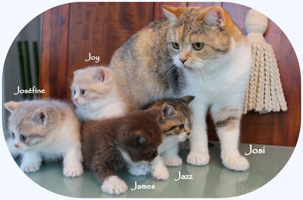 Josi und ihre J-Linge