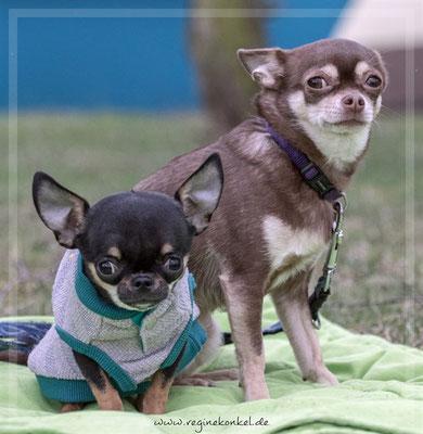 Lotte und Luca - werden nur ZUSAMMEN  vermittelt