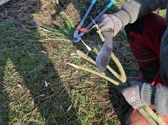das richtige Werkzeug (Foto:NABU-Oberbiel)