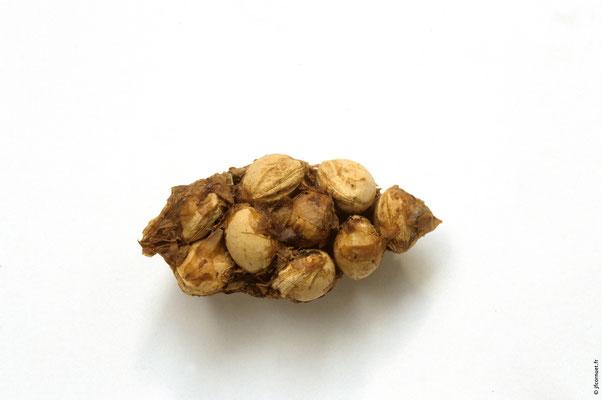 CORNEILLE NOIRE pelote de noyaux de cerises