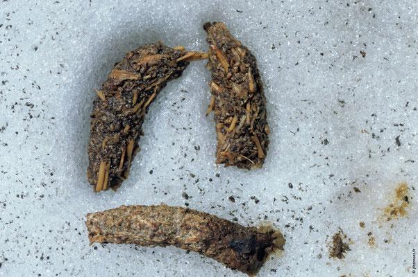 LAGOPÈDE ALPIN crottes