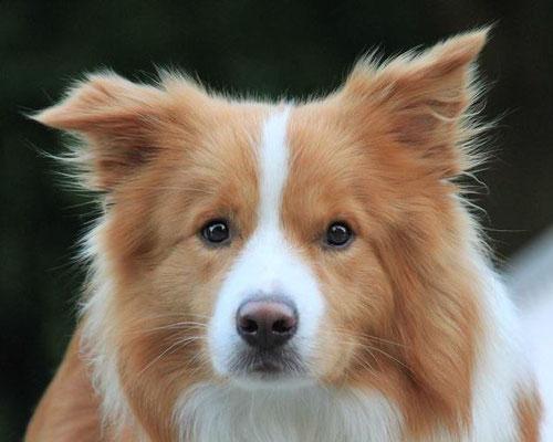 Duke mit einem Jahr