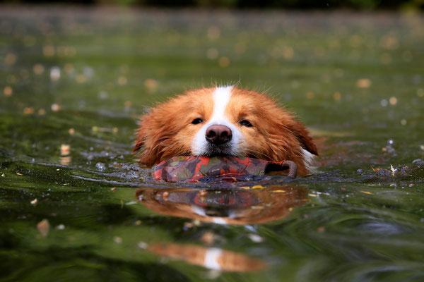 Duke beim Schwimmen