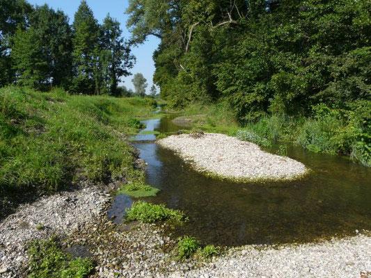 Riedkanal Rastatt, Foto: NABU/Klatt