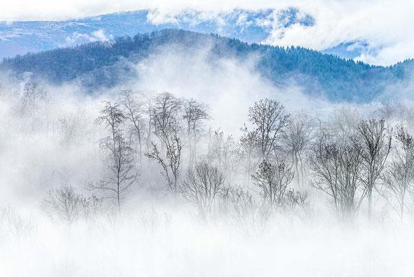 Comme un arbre dans la brume