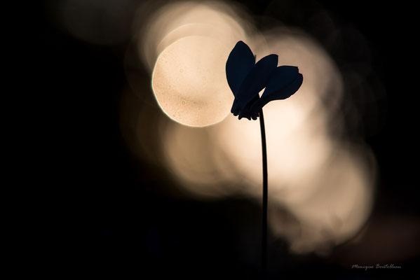 ombres du soir