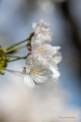 Cache-fleurs