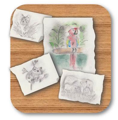 Skizzen von Tieren Kohle/Kreide