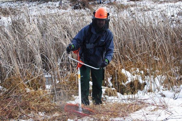 Sven Kremer beim Freischneiden der Feld-Brombeeren