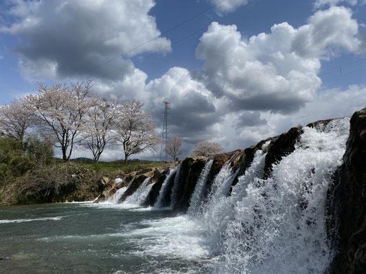 ダイナミックな12ヶ滝と桜