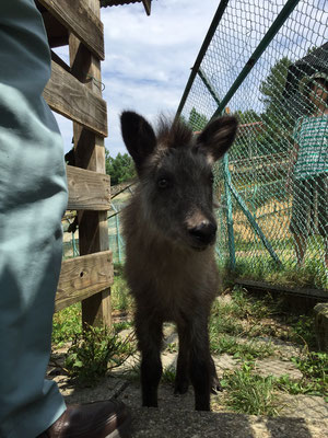最近保護され 近日中に石川動物園で名前募集♪