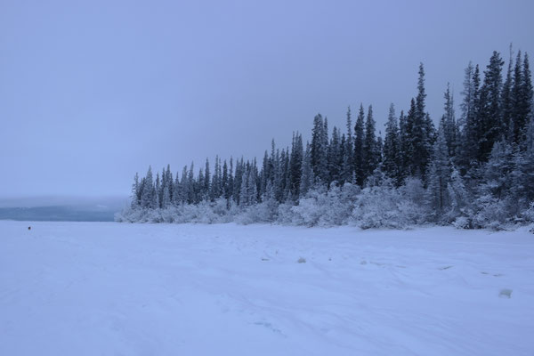 different view of the lakeside forest from further out on the ice on the frozen tagish lake