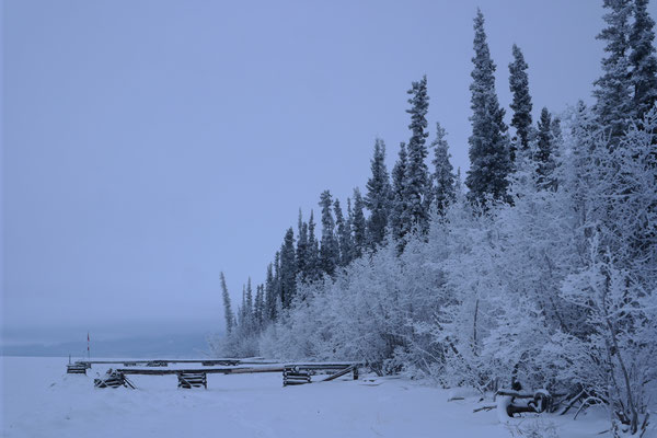 a boardwalk leading out onto the frozen tagish lake, forest in the background and snow