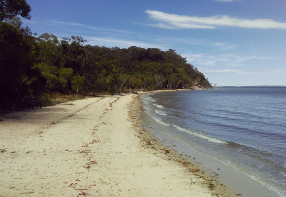 Arriving at Fraser Island...low tide, white beach, forest...what more?