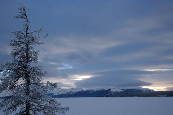 tree to the left looking at some mountains over the frozen tagish lake