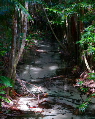 A small and very clear creek flowing through a forest.