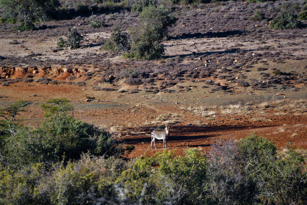 The closest I ever got to a zebra during my 6 weeks in South Africa!