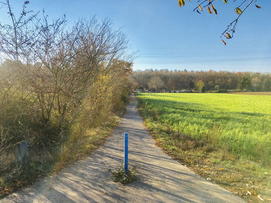 Benjeshecke Oftersheim