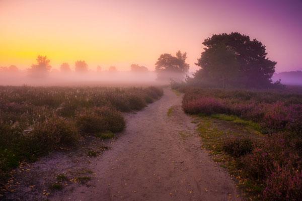 August 2017 - Zum Sonnenaufgang in der Westruper Heide. Mein erstes HDR