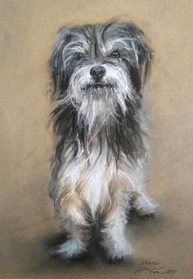 """Max"", Pastell, 29 x 39"