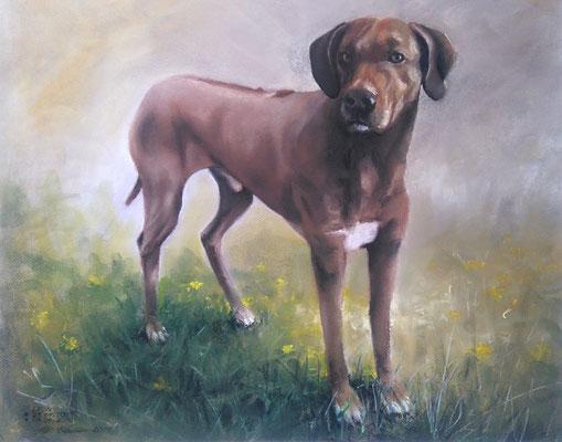 """Leon"", Pastell, 39 x 49"