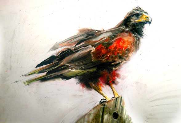 """""""Young Hawk"""", Pastell, 35 x 25"""