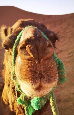 Méharée désert Maroc
