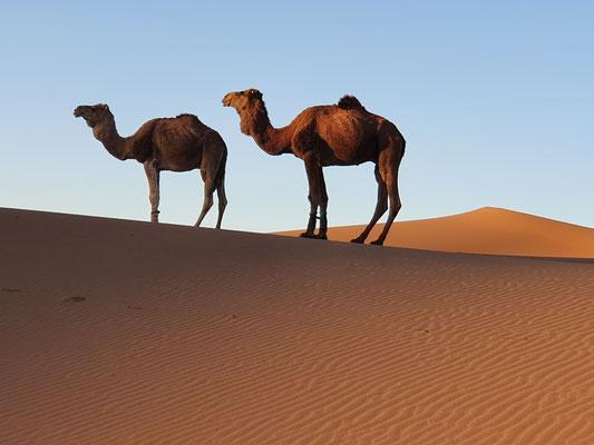 guide de voyage : rejoindre M'hamid el Ghizlane