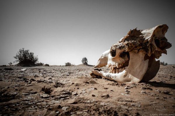 les  hommes bleus du sahara