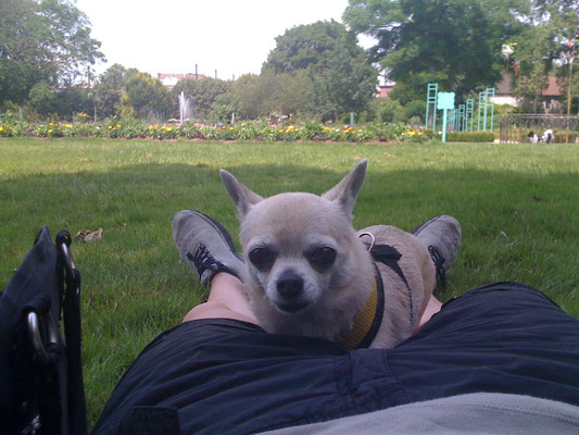 Fifi im Park