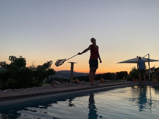 Janine rettet die Junikäfer aus dem Pool