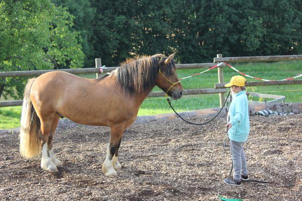 Lou, Korrektur-Pferd